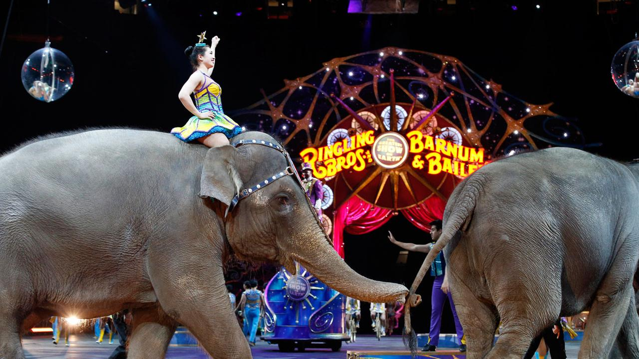 In this March 19, 2015, file photo, elephants walk during a performance of the Ringling Bros. and Barnum and Bailey Circus, in Washington.