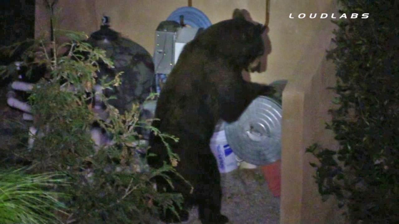 A family in Devore came home to find a bear hanging around in their pool area.