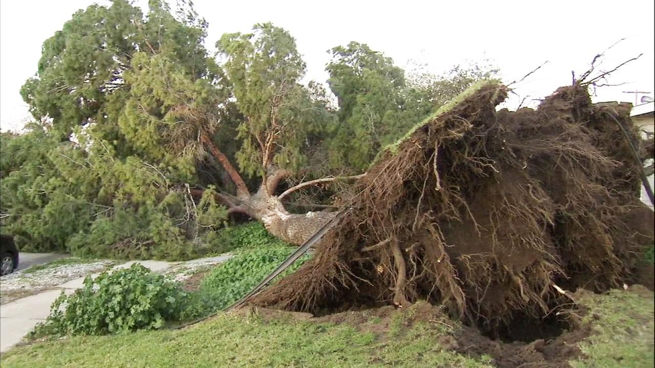 A tree in Mission Hills blocks a street and nearly misses a home after it crashed down due to strong winds in the area on Saturday, Jan. 28, 2017.
