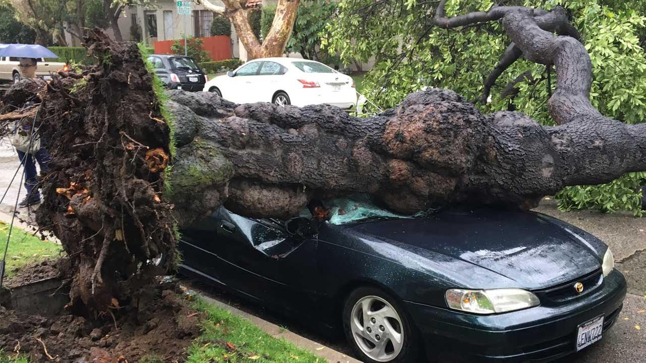 PHOTOS: Powerful storm topples trees, causes damage in SoCal