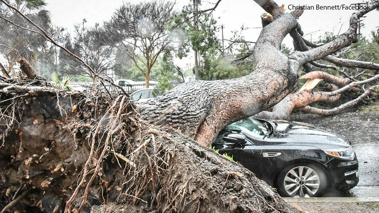 A tree crushes a black sedan in Alhambra during a massive storm throughout SoCal on Friday, Feb. 17, 2017.Christian Bennett/Facebook