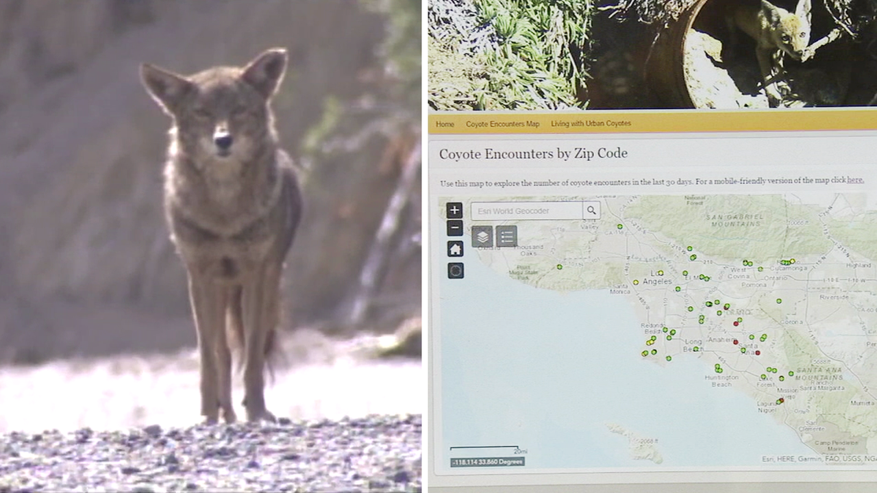 New UC website tracks increase in CA coyote encounters