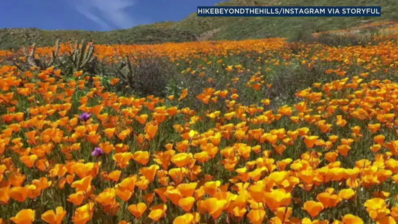 Southern Californias wet, stormy winter has created breathtaking scenes in its surrounding hillsides and mountains.