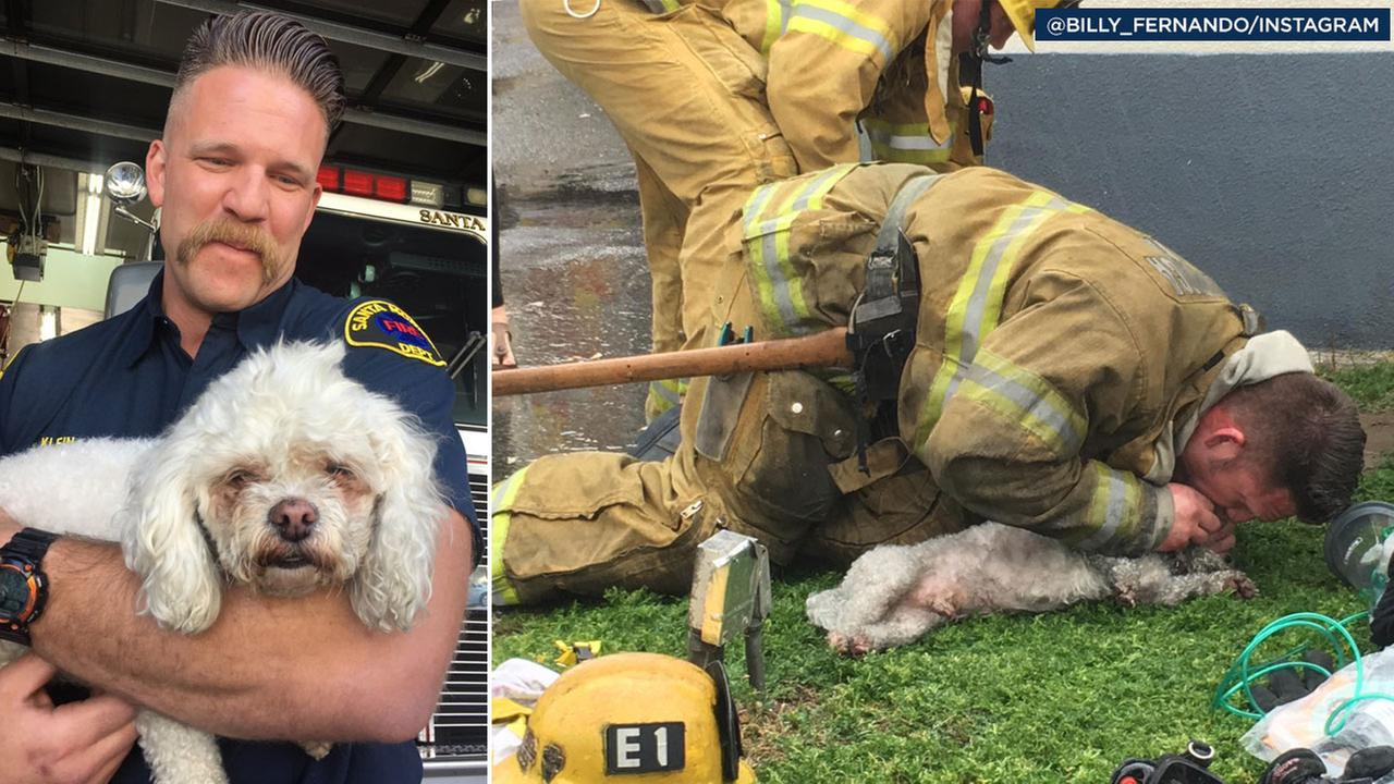 Nalu, a 10-year-old Bichon Frise/Shih Tsu mix, reunites with his firefighter rescuer who used CPR to save his life after being taken out of an apartment fire.