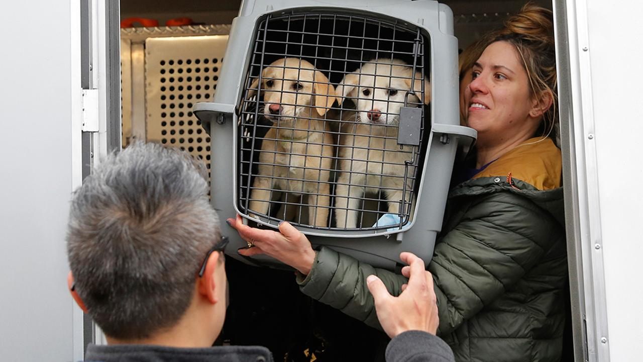 A crate holding two puppies rescued from a South Korean dog meat farm are loaded into a vehicle in the Queens borough of New York on  Sunday, March 26, 2017.