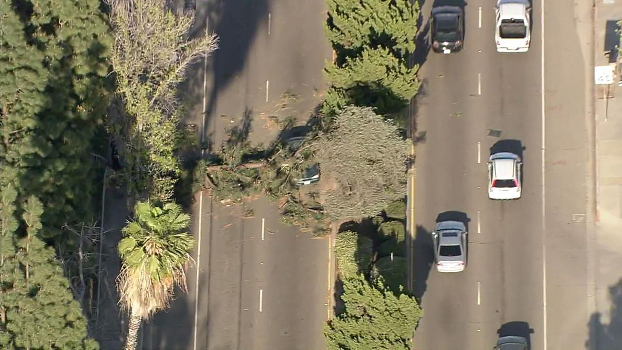 Mondays high winds knocked down trees and power lines throughout the Los Angeles area.