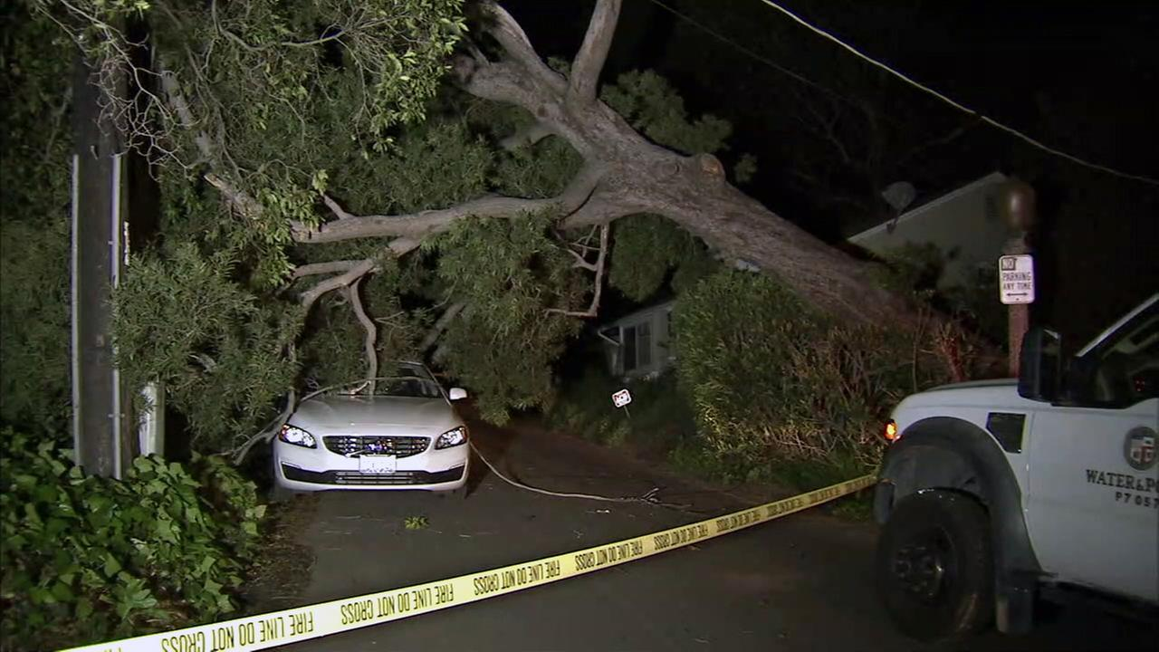 A car was crushed after strong winds toppled a tree in Sherman Oaks the evening of Monday, March 27, 2017.