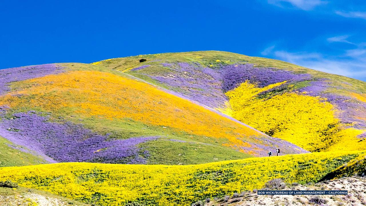 Southern California super bloom migrates north of Los Angeles