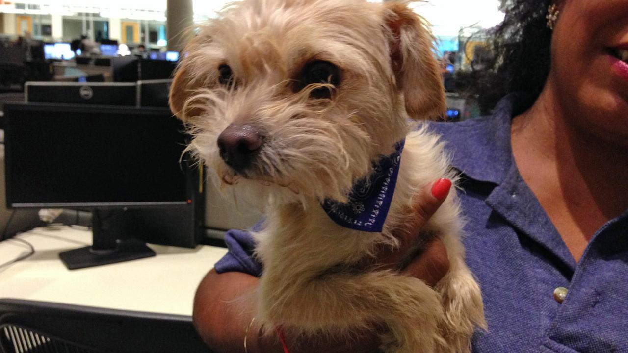 Our Pet of the Week on Tuesday is a 5-year-old Terrier mix named Louie. Please give him a good home!