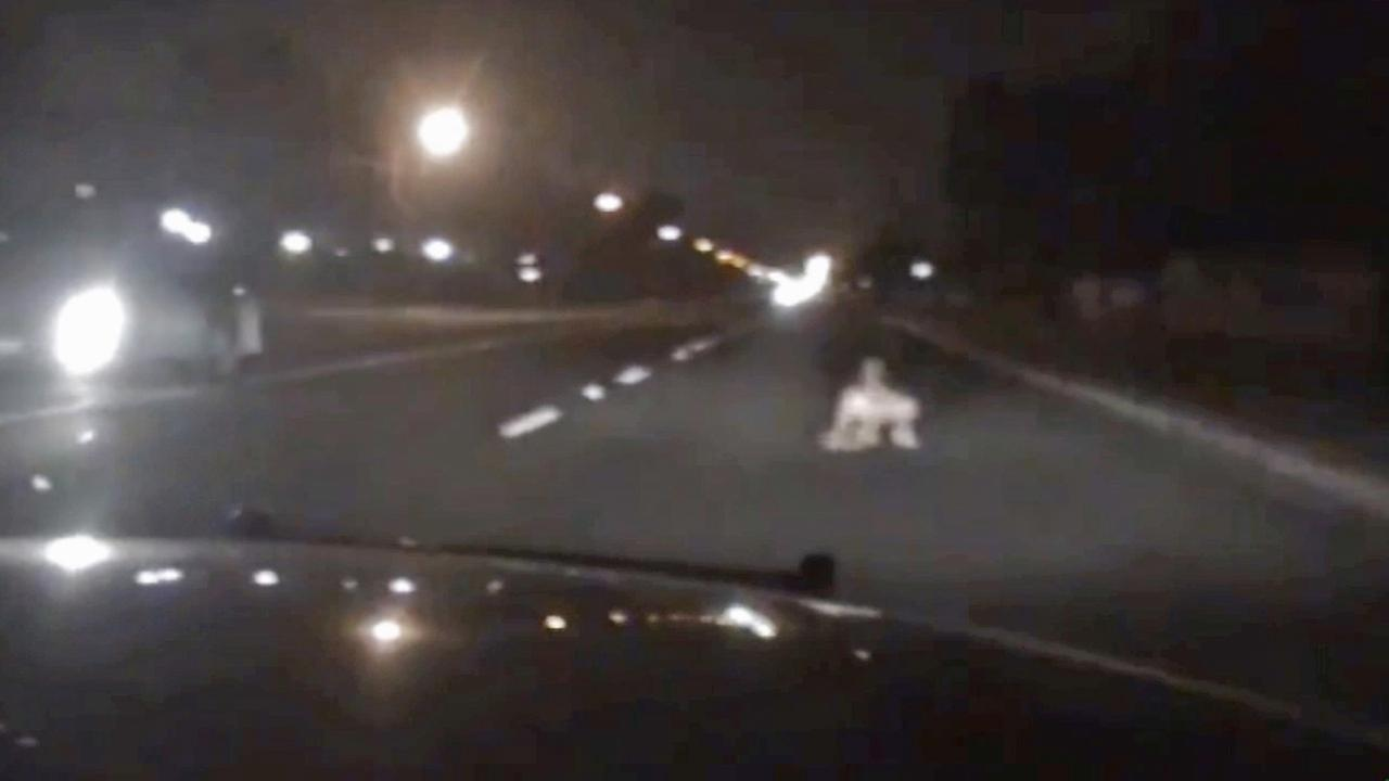 A still from Cypress police dash cam video shows the moments before an officer avoided hitting a woman who was sitting in the street on Friday, July 4, 2014.