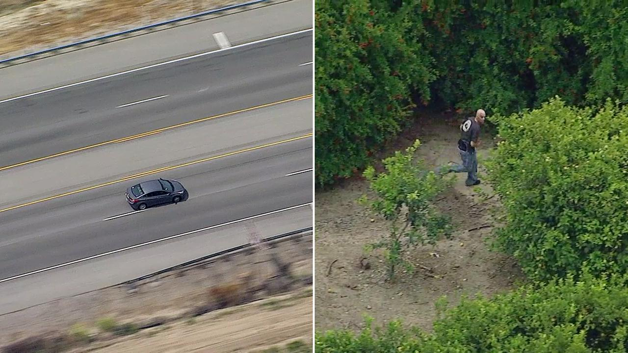 A suspect leading CHP on a chase through Ventura County fled on foot through an orange grove in Santa Paula on Friday, May 5, 2017.