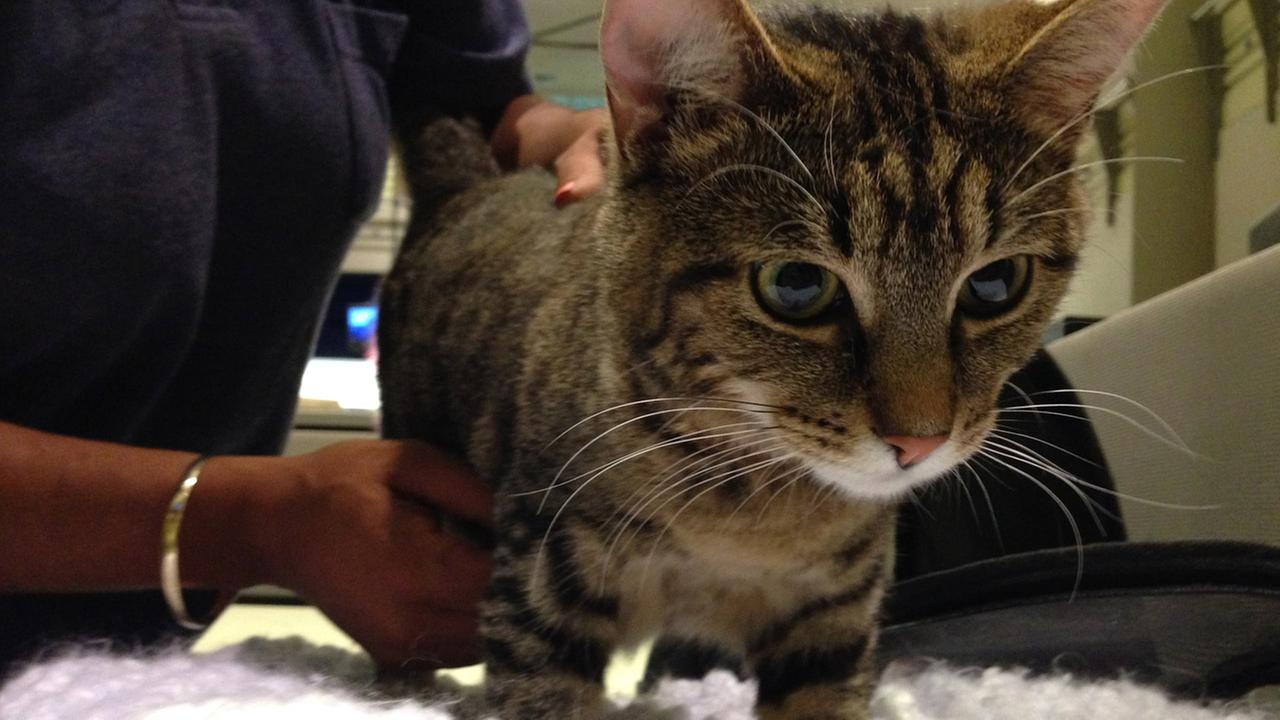 Our Pet of the Week on Tuesday is a 2-year-old female cat named Beya. Please give her a good home!