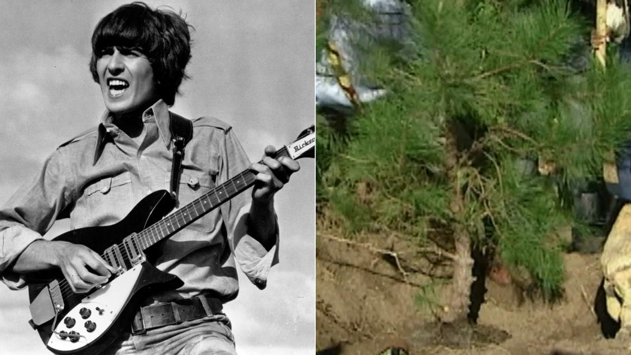 A tree planted in Griffith Park to honor former Beatle George Harrison has been killed - by beetles.