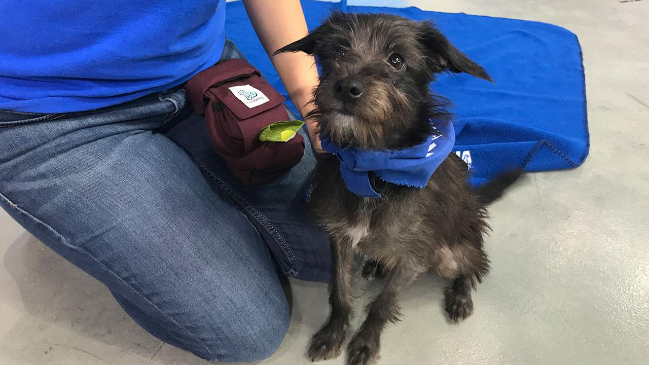Our ABC7 Pet of the Week segment on Thursday, June 29, featured Reba, a 1-year-old terrier mix. Help give her a good home!
