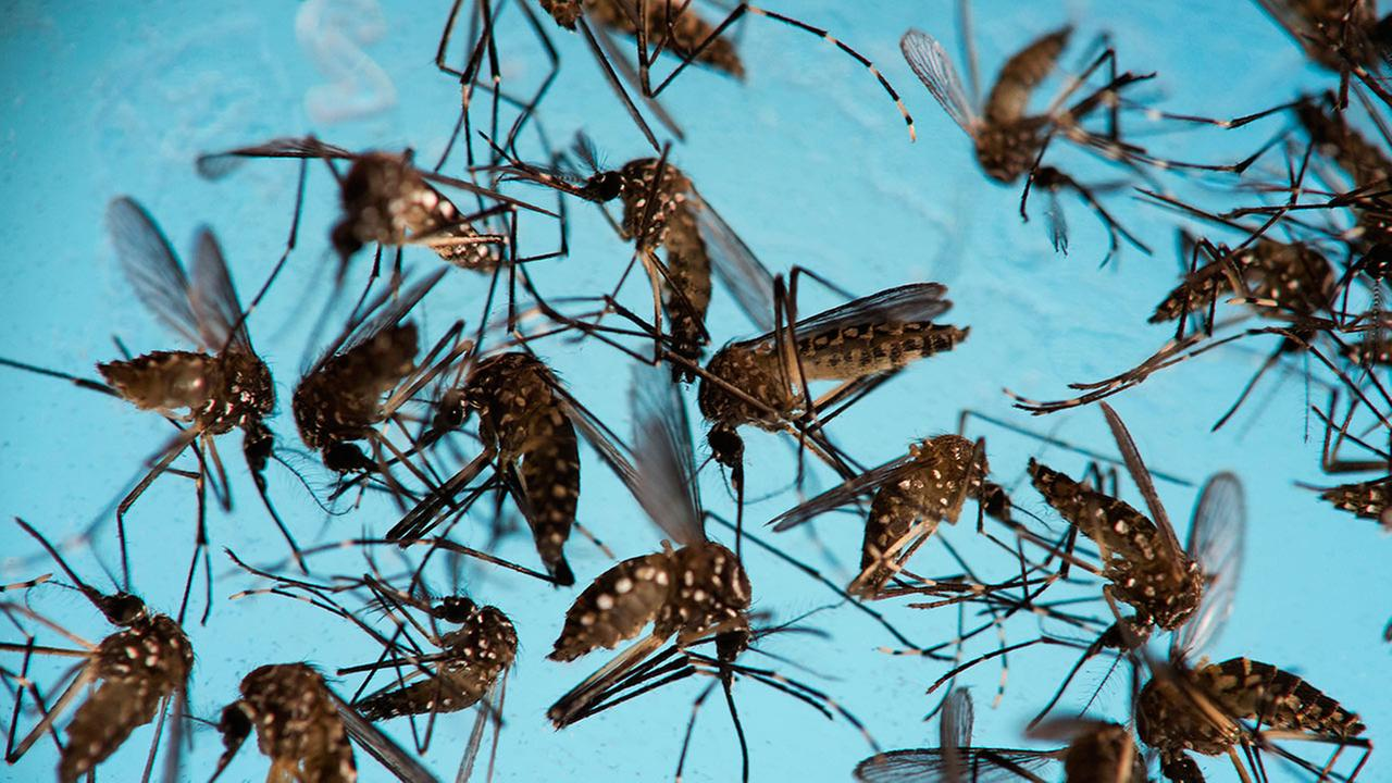 Essex mosquito pool tests positive for West Nile Virus