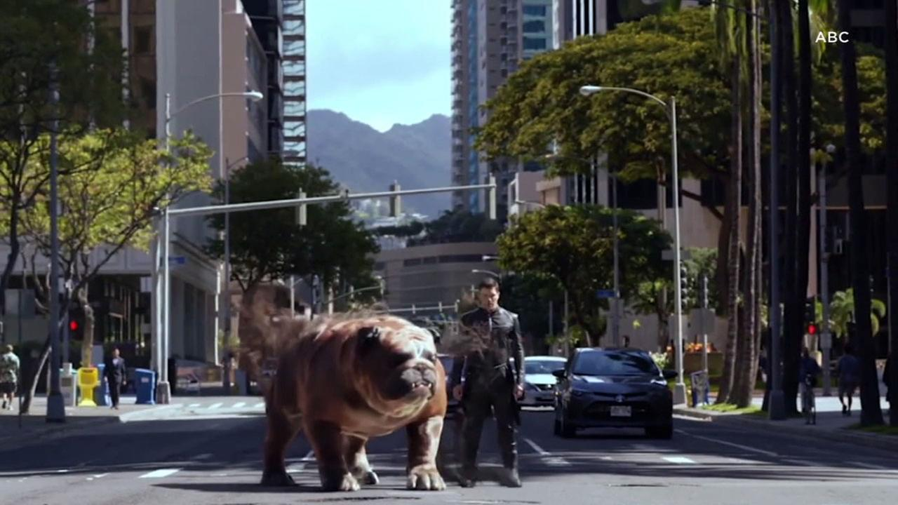 One of the characters in the new TV series Marvels Inhumans is a giant, teleporting dog.