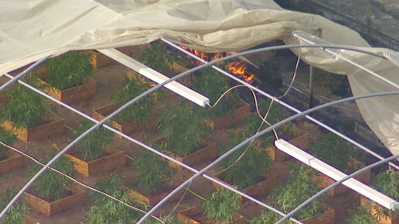A brush fire in Perris spread to what appeared to be a marijuana growing operation.
