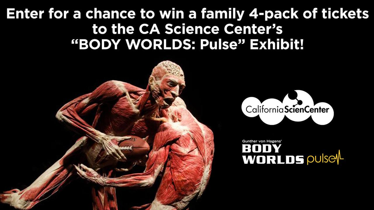 """Enter for a chance to win a family 4-pack of tickets to the CA Science Center's """"BODY WORLDS: Pulse"""" Exhibit"""