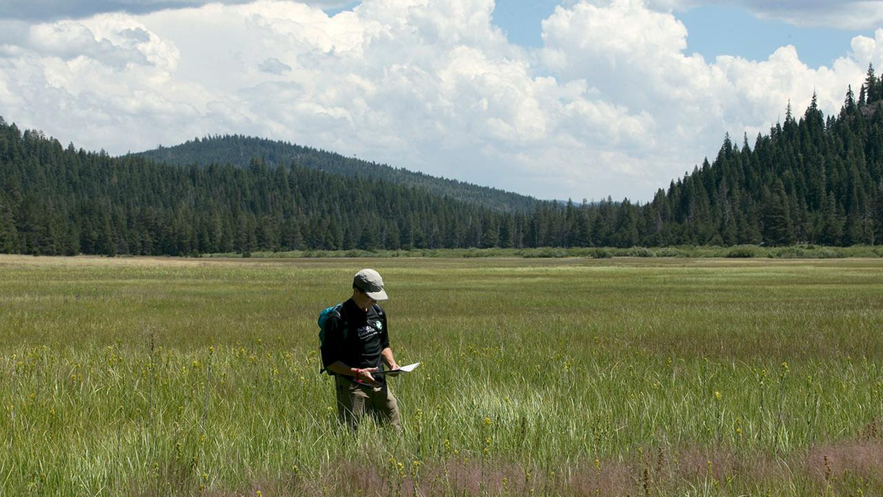 Elliott Wright, senior associate director of philanthropy for the Nature Conservancy, walks through tall grass in the Lower Carpenter Valley near Truckee, Calif. on July 25, 2017.