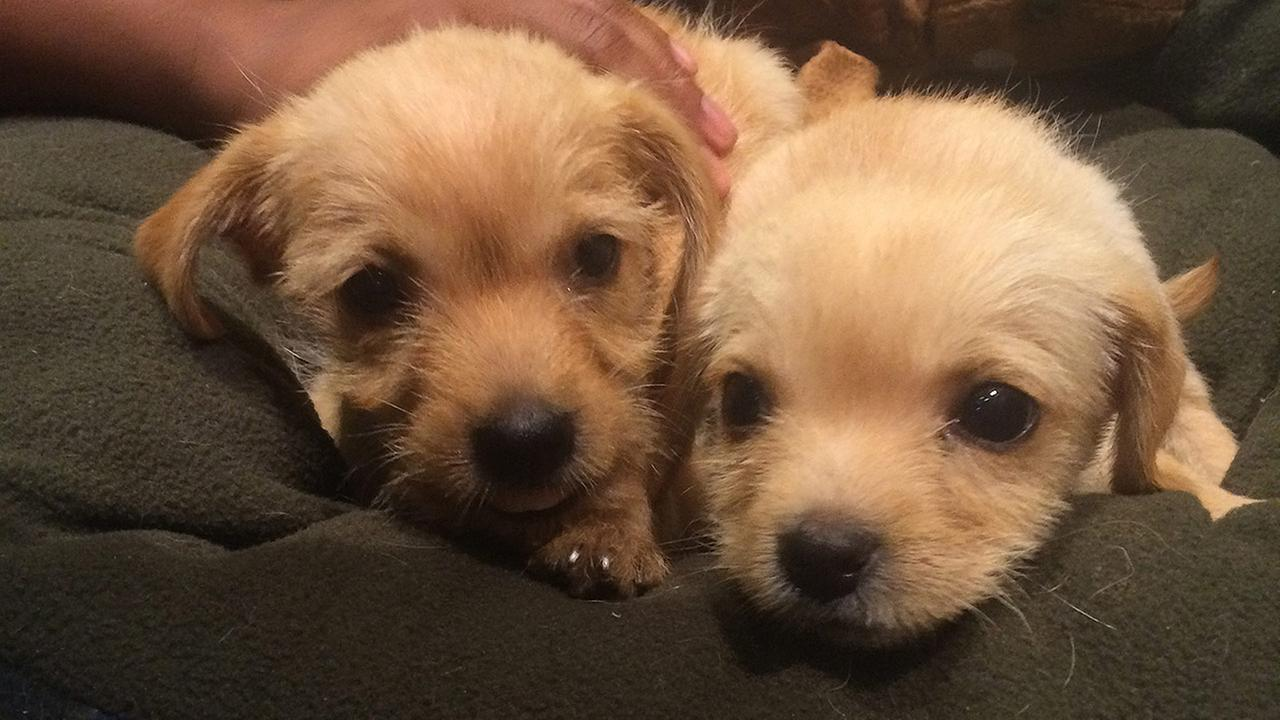 Our Pets of the Week on Tuesday are 2-month-old male puppies named Brian and Bailey. Please give them a good home!