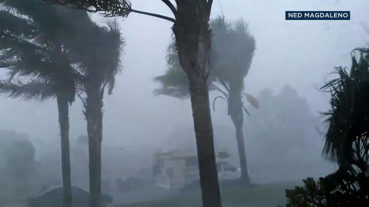 Heavy rain and wind buffeted palm trees in Perris on Tuesday, Aug. 1, 2017.Ned Magdaleno