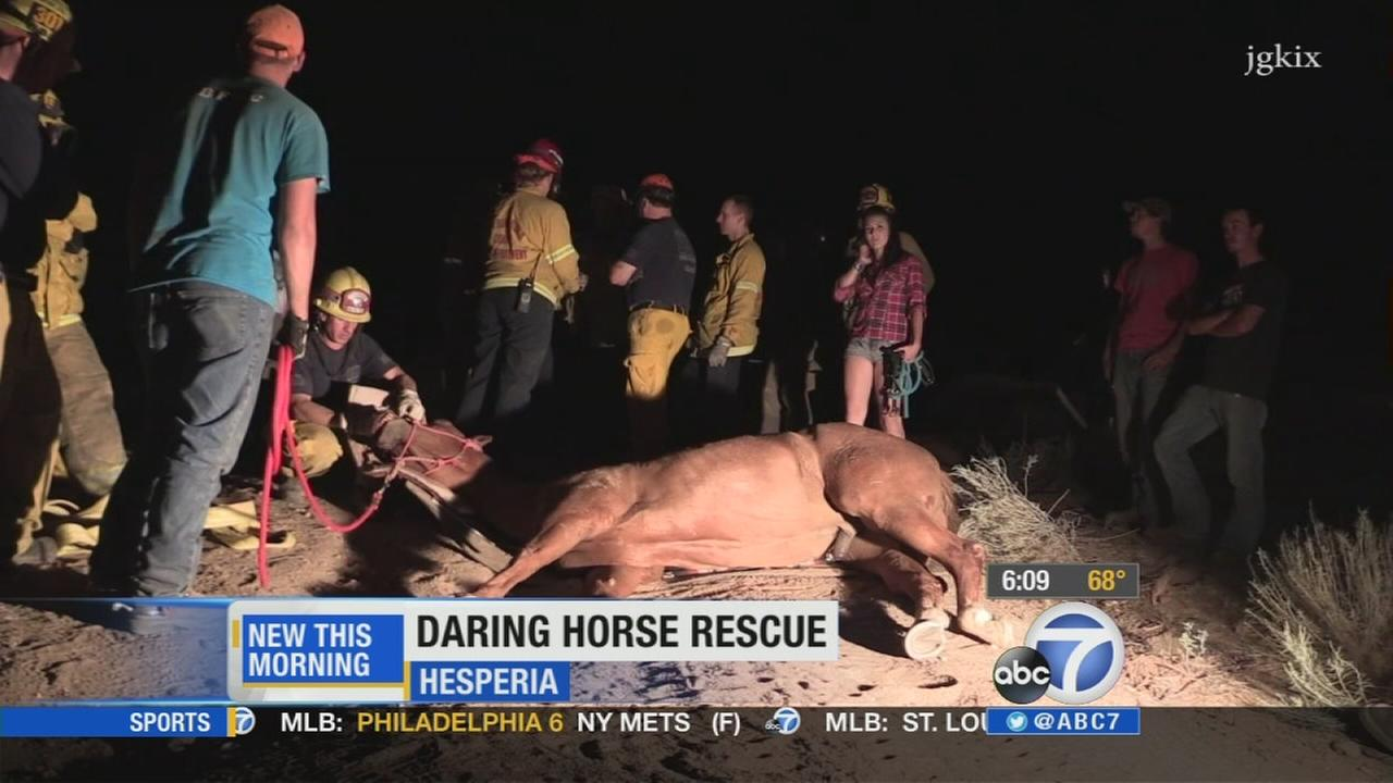 A dramatic horse rescue in Hesperia was caught on camera on Tuesday night.