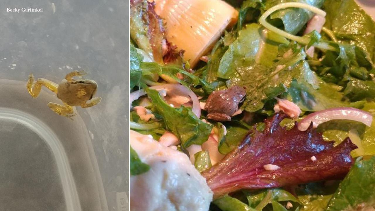 A small frog found inside a box of lettuce mix by a Corona woman.