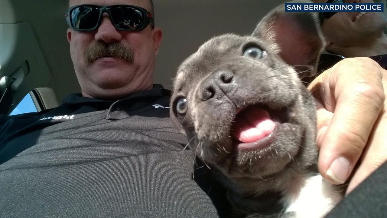 One of two San Bernardino police detectives holds a puppy that was reported stolen in the city on Aug. 11, 2017.