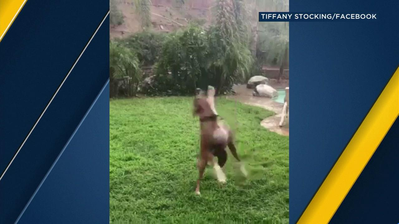 Dog delights in catching backyard raindrops in Corona