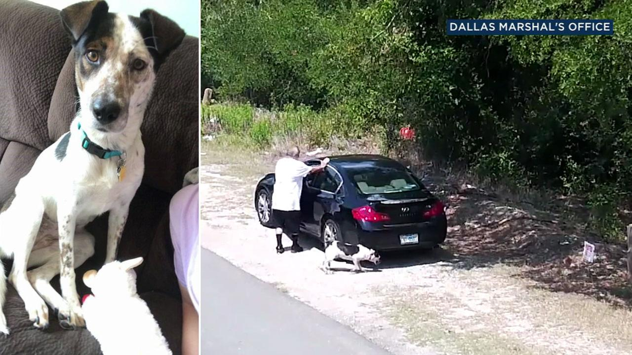 An image of a dog who was abandoned on the side of a Texas road is shown alongside camera footage of the crime.