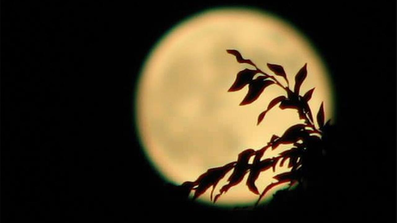 ABC7 viewer Gina Moore shared this picture on the ABC7 Facebook page of the supermoon over Glendale, Calif., on Sunday, Aug. 10, 2014. ABC7 viewer Gina Moore