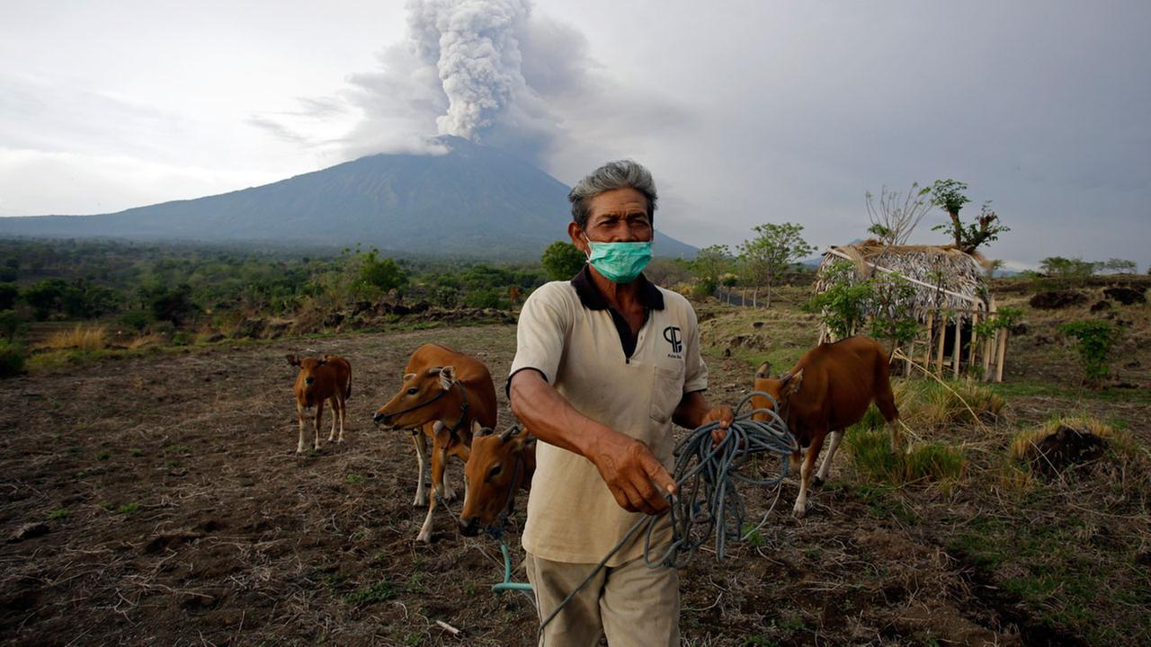 A villager leads his cows to a filed with Mount Agung volcano erupting in the background in Karangasem, Bali, Indonesia, Tuesday, Nov. 28, 2017.