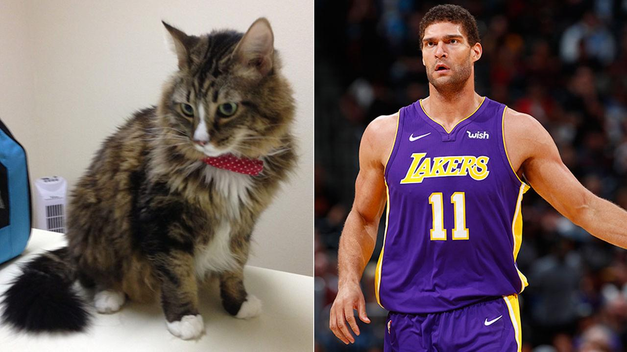 Lakers center Brook Lopez evacuated his cat Poupin by private car to Fresno when the Skirball Fire threatened his home.