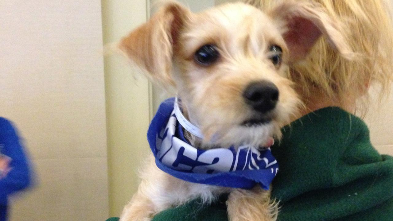 Our Pet of the Week on Thursday, Sept. 11, 2014, is an adorable Terrier mix puppy named Caraway. Please give her a good home!