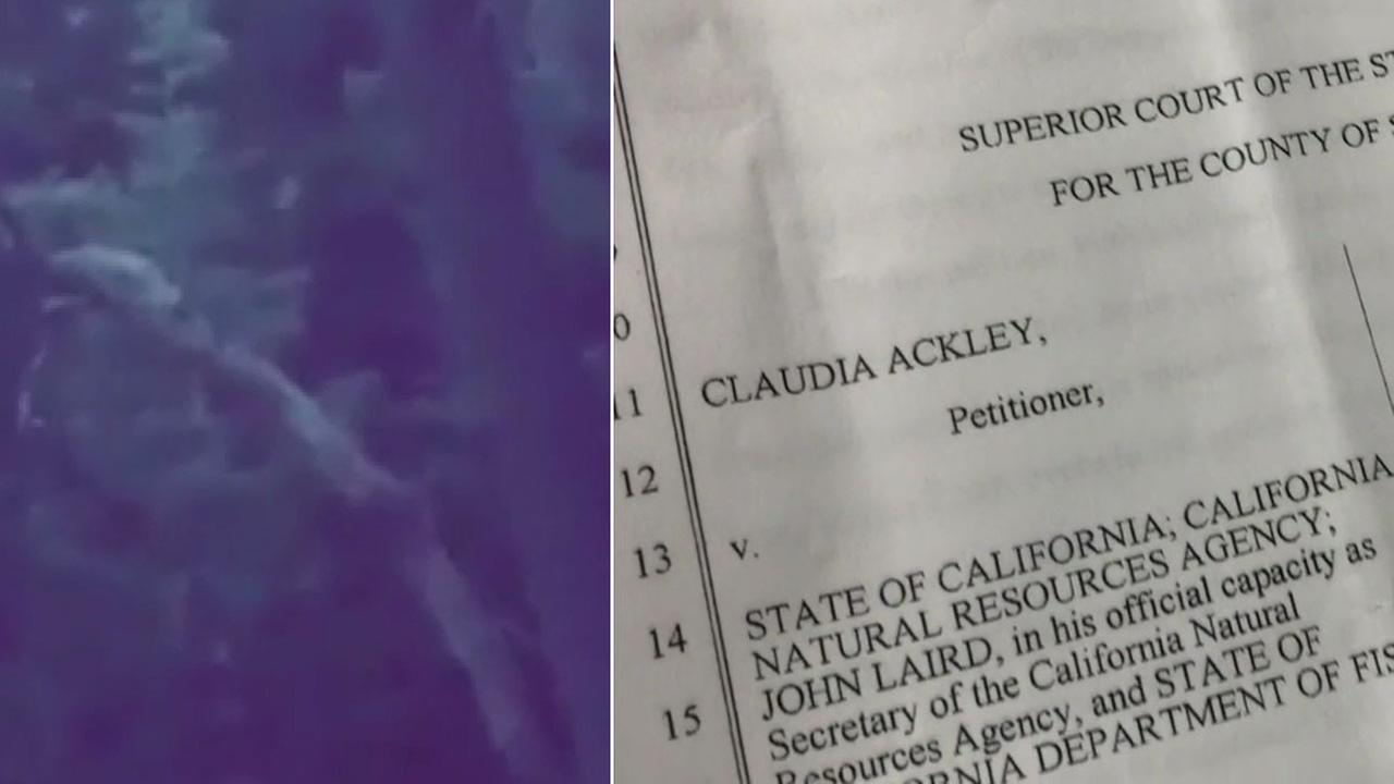 A cellphone video to the left shows what a Crestline woman claims is sasquatch, alongside an image of the lawsuit she filed against California to prove she saw Bigfoot.
