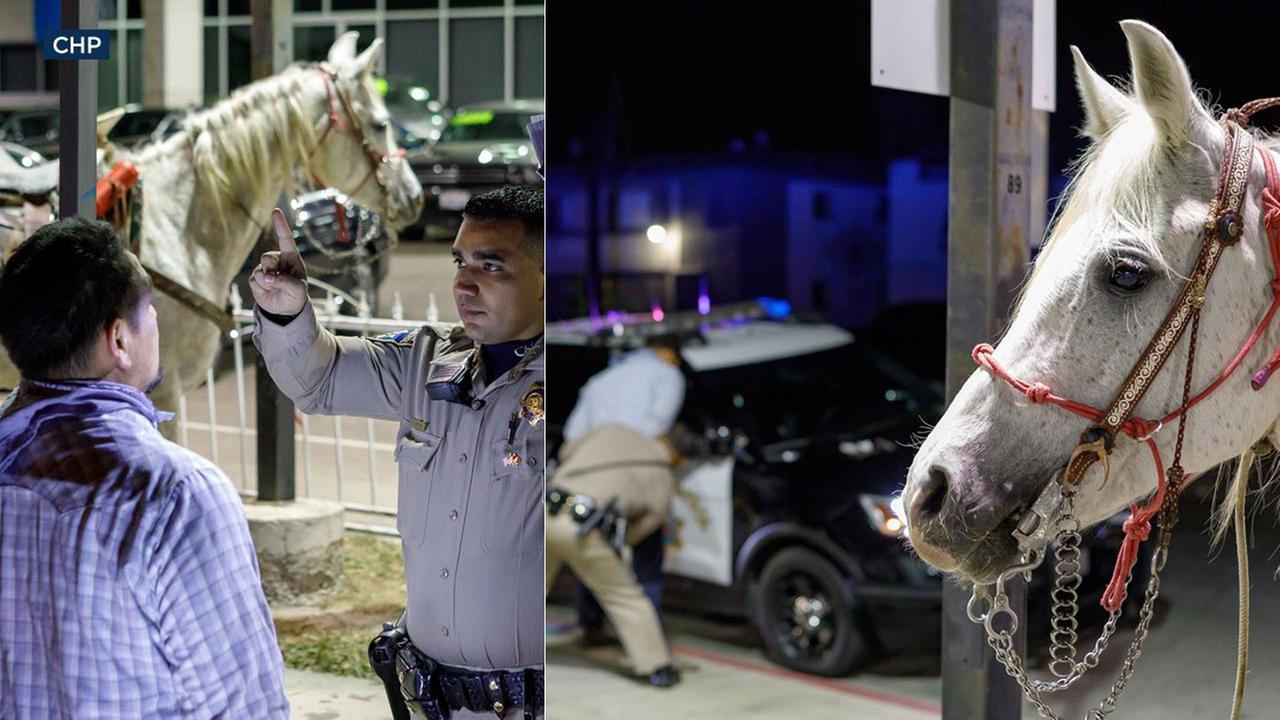 Man riding horse on Los Angeles freeway busted for DUI