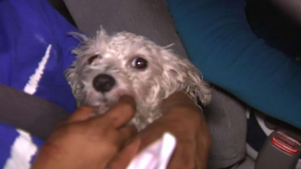 A dog named Gordo was struck during a wild police chase in South Los Angeles Wednesday, Sept. 17, 2014.