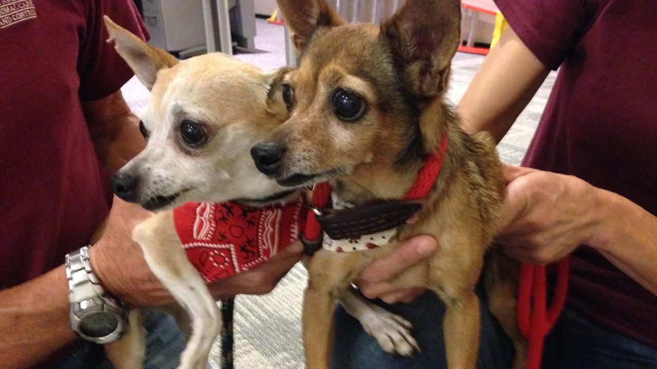 Our Pets of the Week on Thursday, Sept. 18, 2014, are two sweet Chihuahuas named Mimi and Lucky. Please give them a good home!
