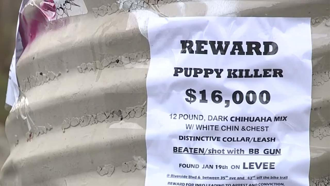 A puppy was found fatally beaten and hanging from a tree in Sacramento, and area residents are searching for answers.