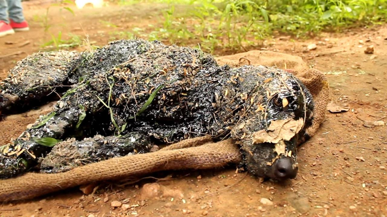 A dog that was covered in tar is seen in this image from YouTube.