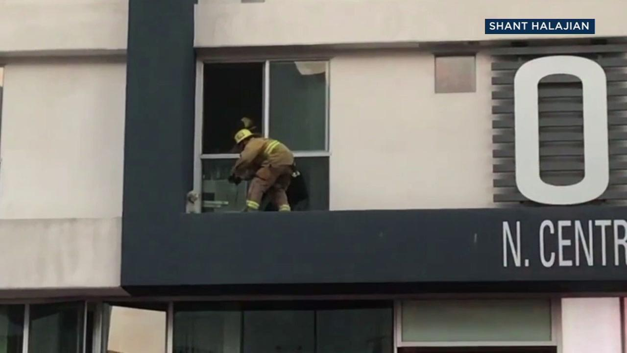 Glendale firefighters went out on a ledge on an apartment building Tuesday to save a scared little dog.