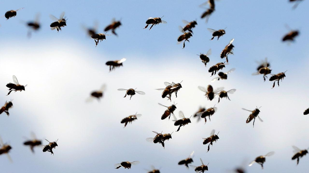 FILE - Bees fly in front of beehive during a sunny day, Wednesday, April 4, 2018.