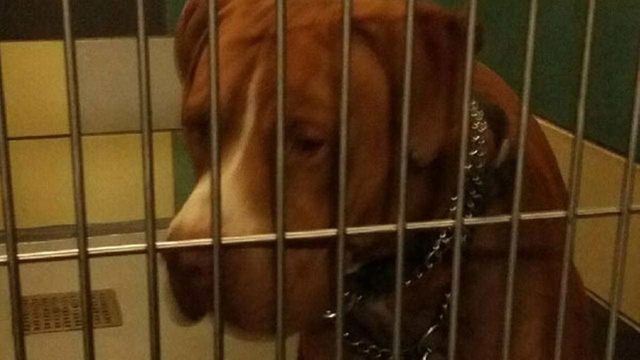A 1-year-old pit bull was euthanized after attacking a 61-year-old woman in the Valle Vista area on Monday, Oct. 20, 2014.