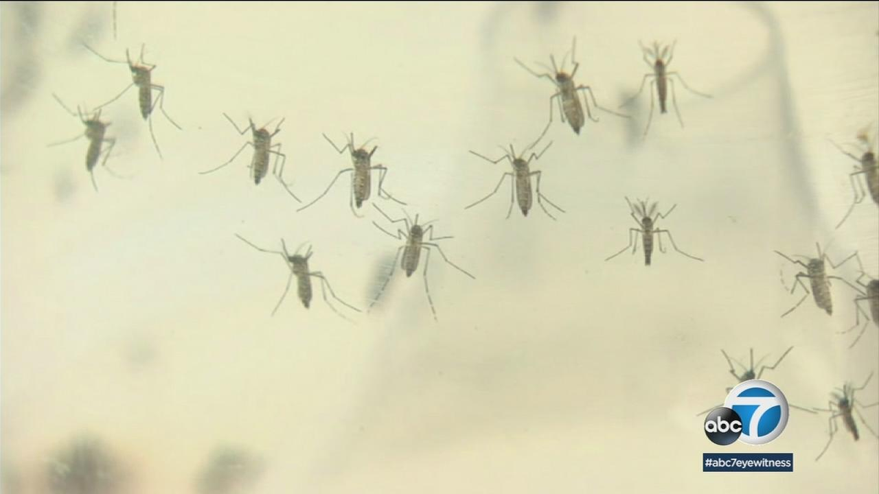 A San Gabriel Valley resident was hospitalized in May with the disease which is spread by the bite of an infected mosquito