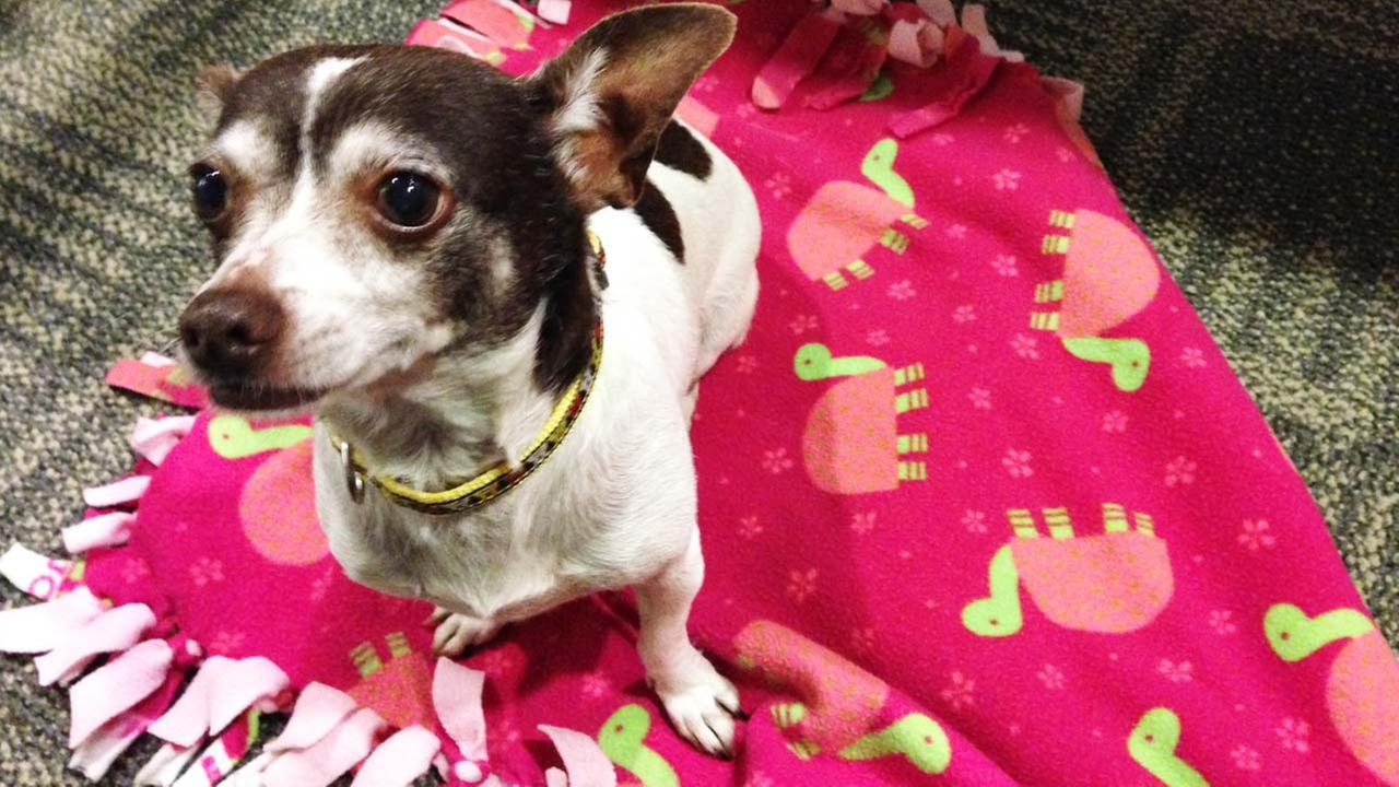 Our Pet of the Week on Thursday is a 10-year-old female Chihuahua mix named Molly. Please give her a good home!