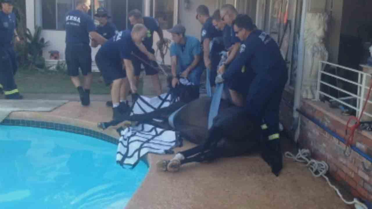 This photo provided by the Mesa Fire Department shows firefighters rescuing a Mesa familys horse from their swimming pool on Saturday, Oct. 25, 2014.