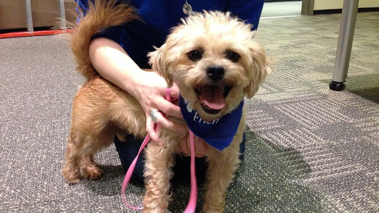 Our Pet of the Week on Thursday, Nov. 13, is a 3-year-old Terrier mix named Newman. Please give him a good home!
