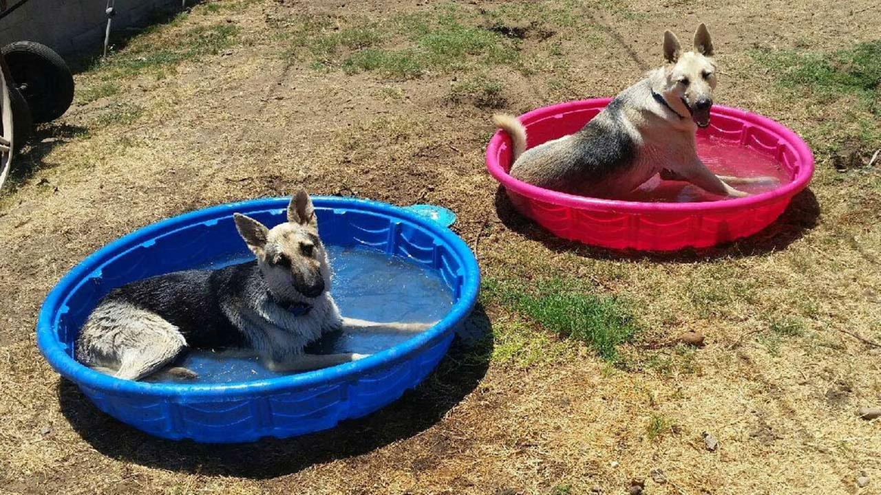 Wolf and Luna are shown in this undated file photo. They were attacked by bees at their Covina home on Sunday, Nov. 16, 2014.
