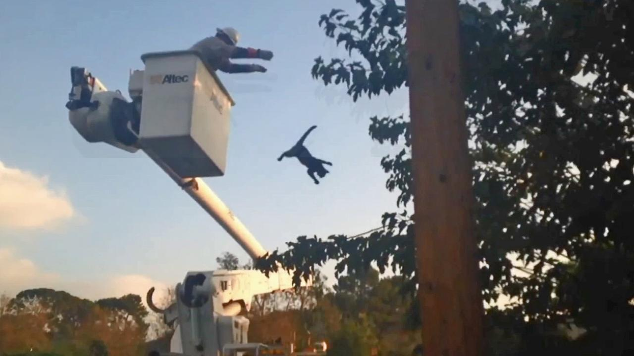 A still from video shows a DWP working during a cat rescue in Sunland.