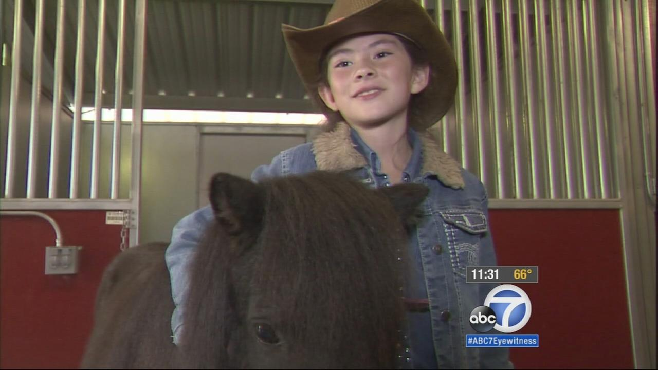 Missing Shetland pony Blossom reunited with 9-year-old owner